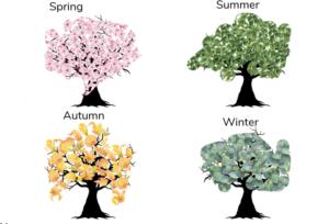 Ffions seasons