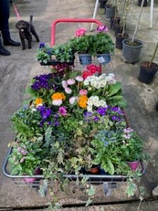 Donation from Roden Nurseries