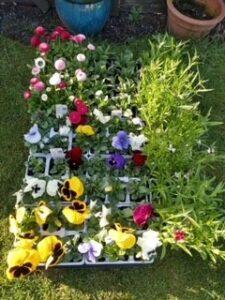 Mildene nurseries flower donation
